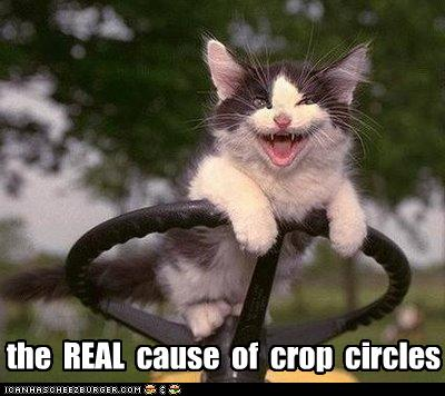 funny-pictures-kitten-causes-crop-circles