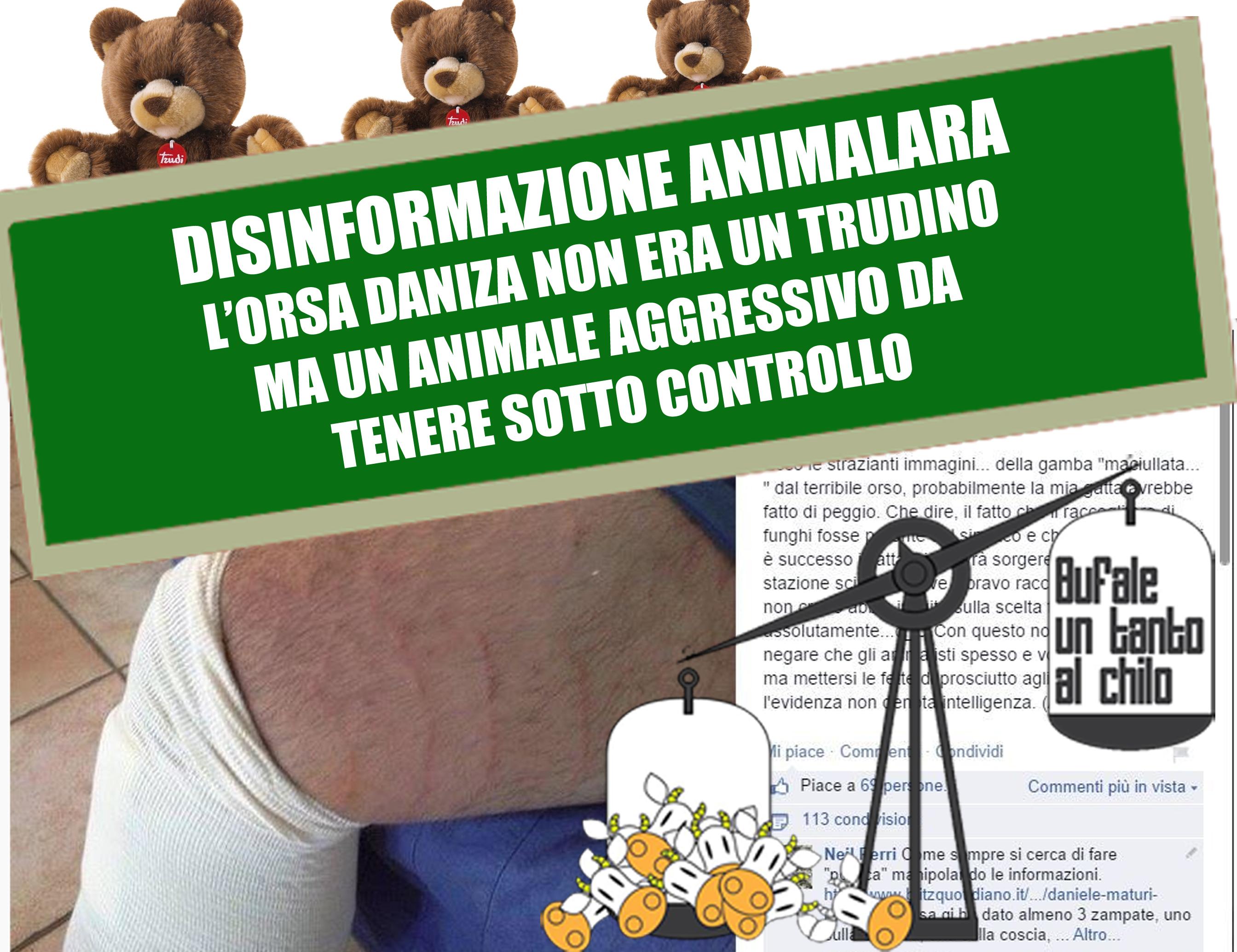 dainza-neil