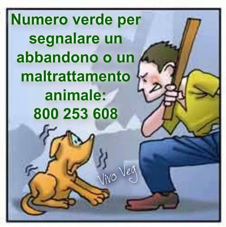 10154108_506198382818472_230679256_n