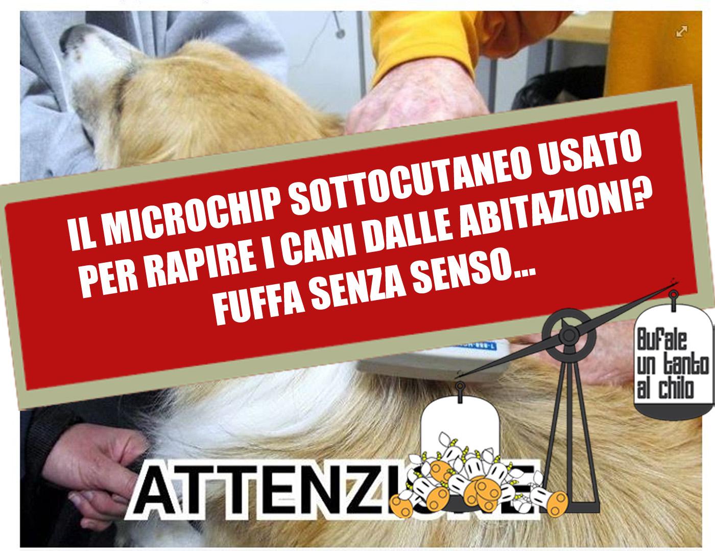 cani-microchip2