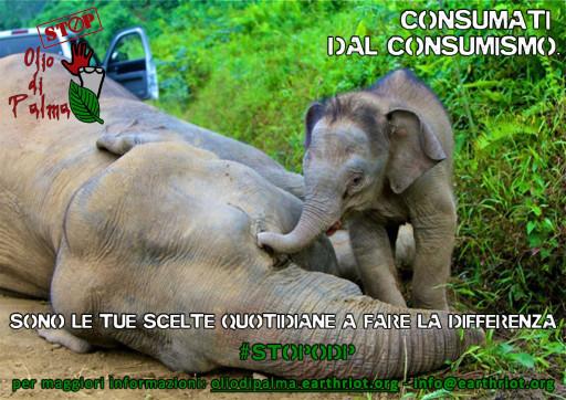 Elefanti-malesi-avvelenati
