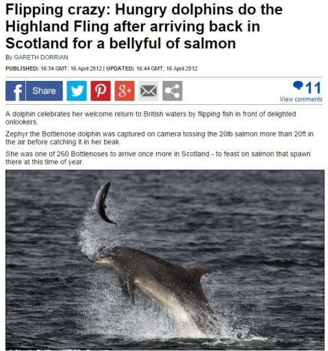 delfini-gioco2