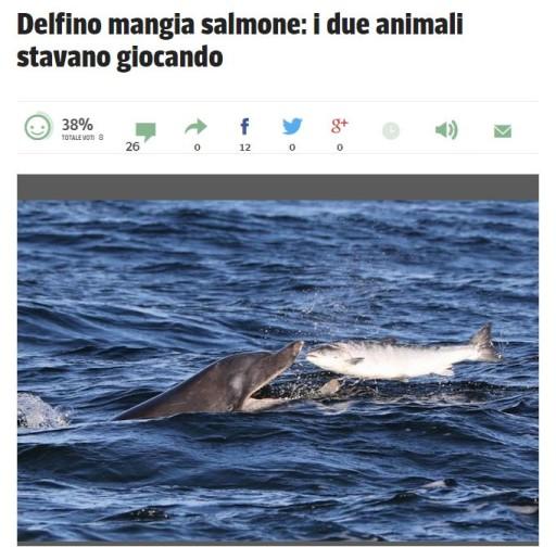 delfinomangiasalmone