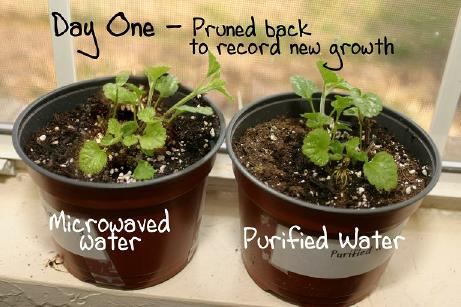 plant2_small