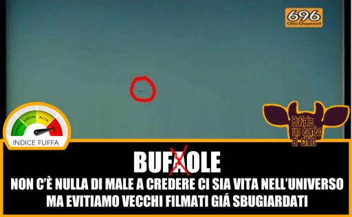 BUFOLE2