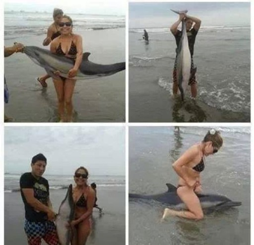 couple-kills-dolphin