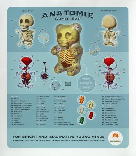brainobrain_gummi_bear_anatomy
