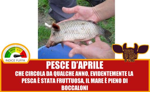 PESCEPORCO1