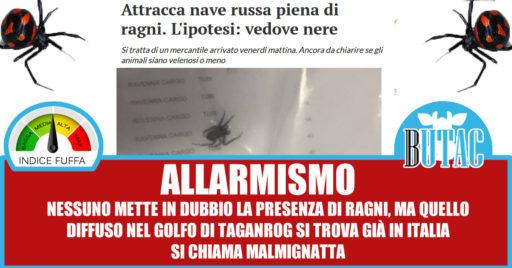 malmignatta1