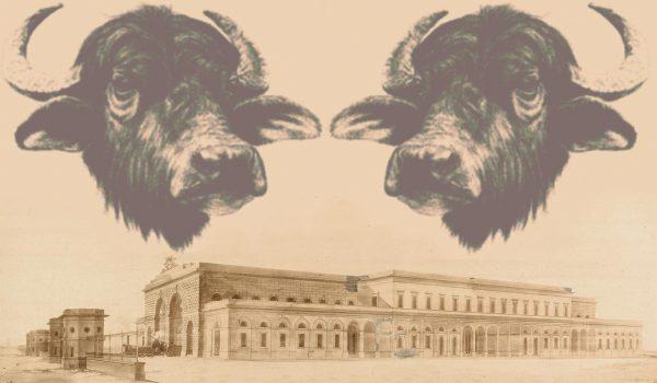 bufale-sulla-leopolda